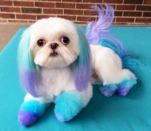 سگ با مزه به چه سگ هایی می گویند؟