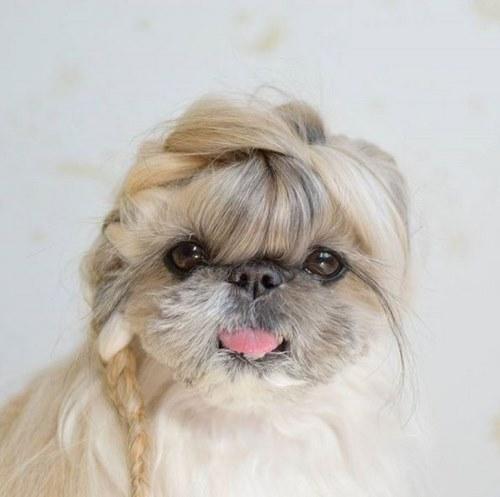 توله سگ بامزه پشمالو