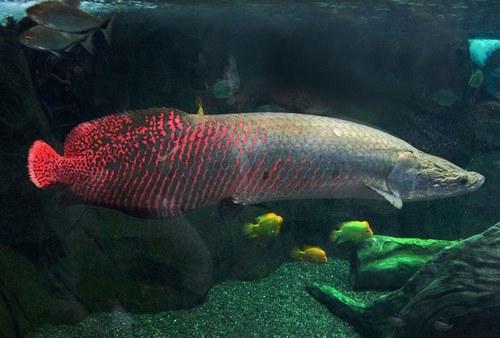قدیمی ترین ماهی جهان