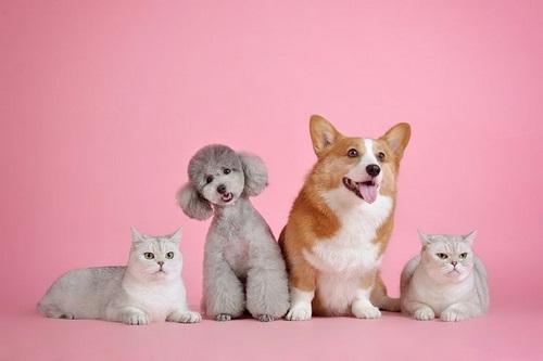درمان پوکی استخوان در سگ و گربه