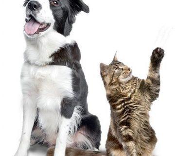 پوکی استخوان در سگ و گربه