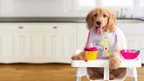به سگ دو ماهه خود غذا چی بدیم؟