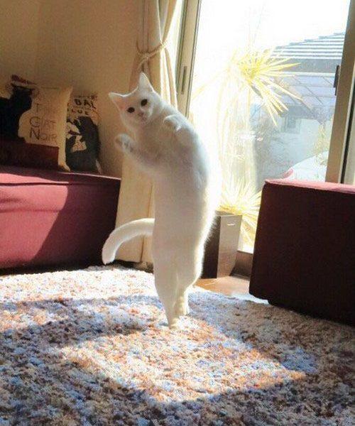 گربه خنده دار