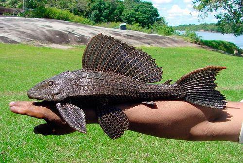 حیوان پاک کننده طبیعت در اقیانوس ها