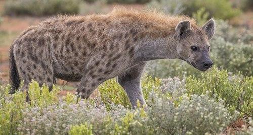 حیوان پاک کننده طبیعت در جدول