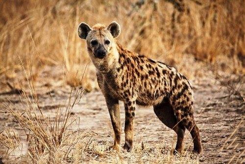 کدام حیوان پاک کننده طبیعت است؟