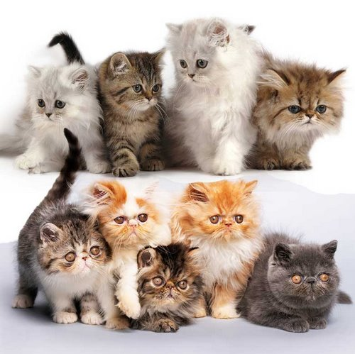غذای این گربه ها چه چیزی است؟