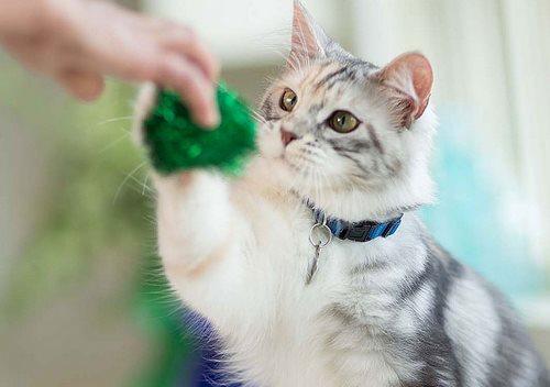 کلیکر گربه