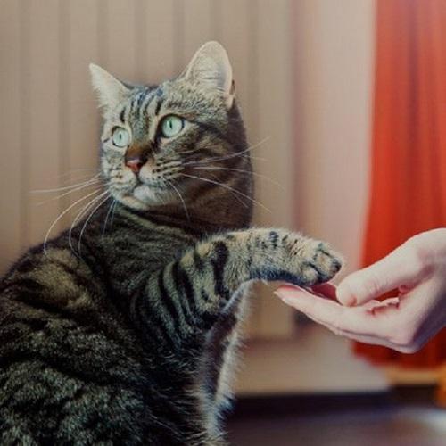 کلیکر گربه چیست؟