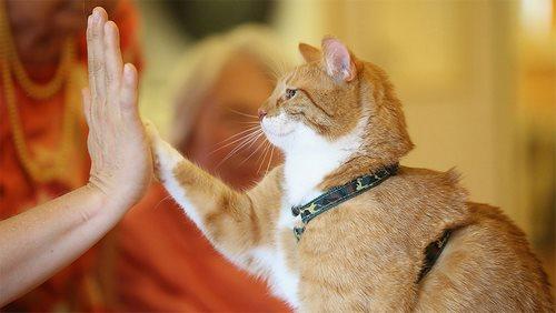 ساخت کلیکر گربه