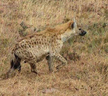 حیوان پاک کننده طبیعت