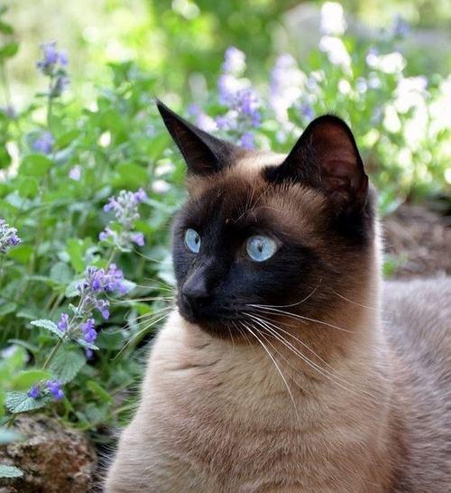 بهترین سایت تهیه گربه اشرافی