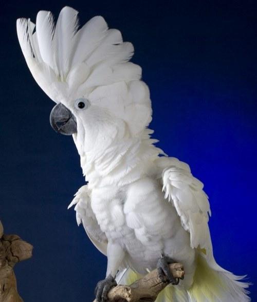 غذای این پرندگان چیست؟