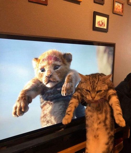 عکس گربه خنده دار