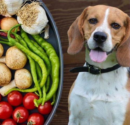 قند میوه برای سگ