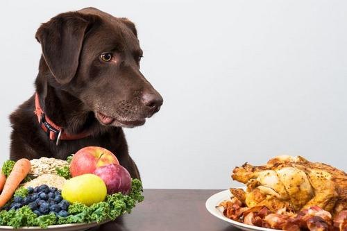 میوه انار برای سگ ضرر داره؟