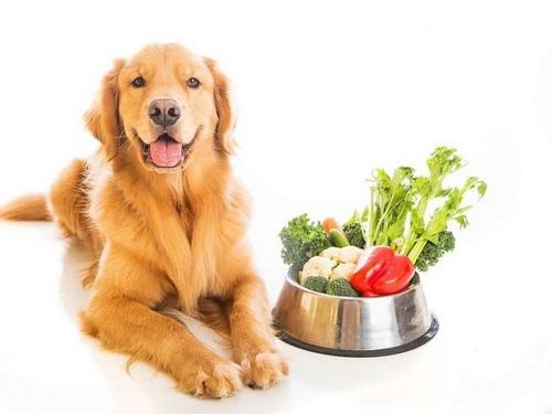نارنگی برای سگ