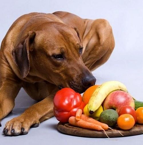 میوه برای سگ