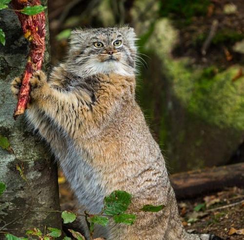 غذای گربه پالاس