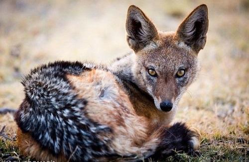 طول عمر این حیوان چقدر است؟