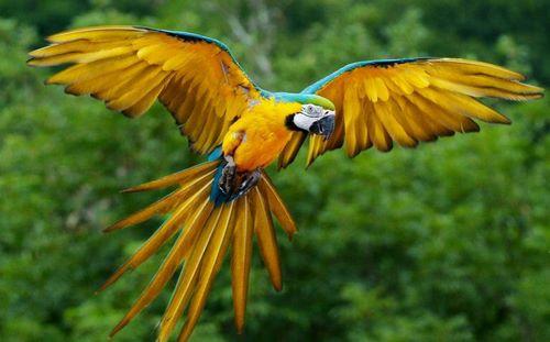 آموزش پرواز به پرندگان
