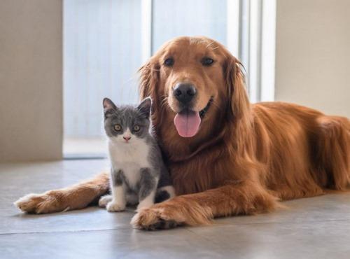 مکمل های تقویتی برای سگ
